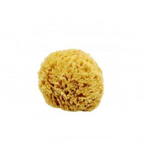 Natural Honeycomb Aegean Sponge small 10 - 12 cm