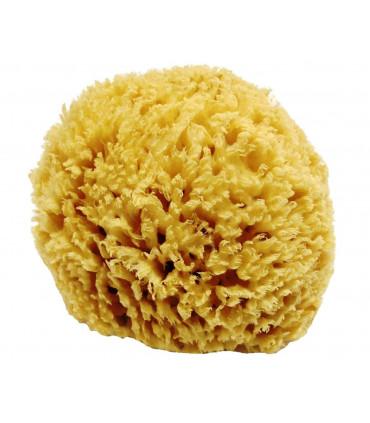 Large size natural sea sponge