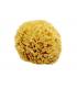 Natural Aegean Sponge – Medium