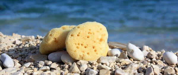 Natural sea sponge for bath