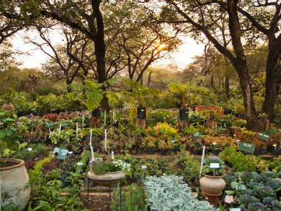 How to make your garden in permaculture!