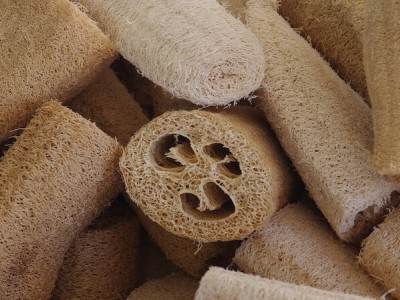 Loofah squash: an exfoliating vegetable sponge with multiple properties
